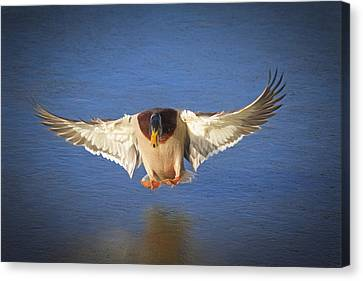Ice Landing Canvas Print by Donna Kennedy