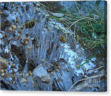 Ice Shards Canvas Print by Jim Thomson