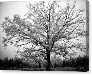 Ice Tree Canvas Print