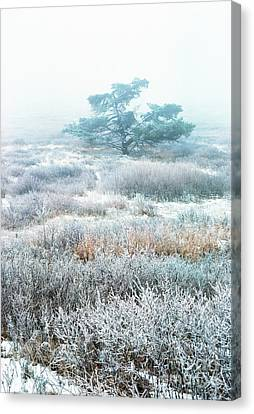 Ice Tree Shenandoah National Park Canvas Print by Thomas R Fletcher