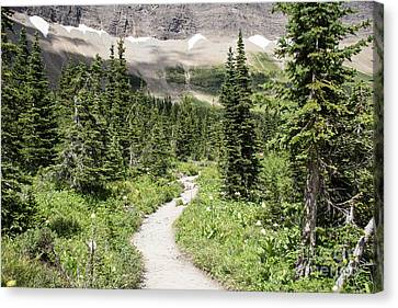 Iceberg Lake Trail Forest Canvas Print