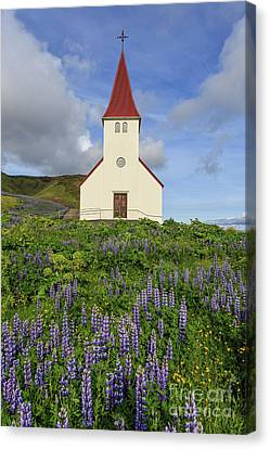 Canvas Print featuring the photograph Icelandic Church Among The Fields Of Lupine by Edward Fielding