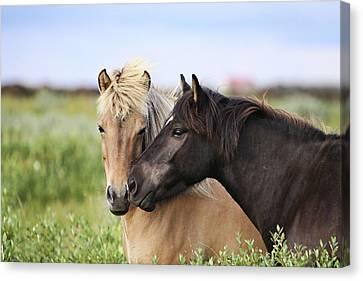Animal Body Part Canvas Print - Icelandic Horse by Gigja Einarsdottir
