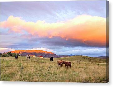 Canvas Print featuring the photograph Icelandic Horses Under The Sunset by Brad Scott