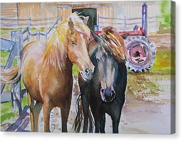 Icelandics Canvas Print by Brenda Myrick