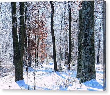 Icey Forest 1 Canvas Print