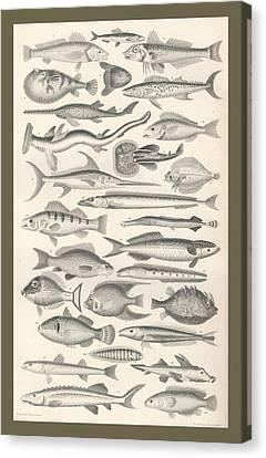 Ichthyology Canvas Print by Rob Dreyer