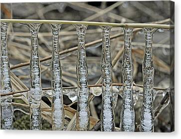 Canvas Print featuring the photograph Icicles On A Stick by Glenn Gordon
