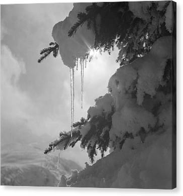 Icicles Canvas Print by German School
