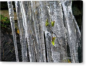 Canvas Print featuring the photograph Icicles by Sharon Talson