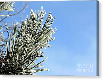 Canvas Print featuring the photograph Icing On The Needles by Michal Boubin