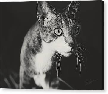 Canvas Print featuring the photograph Ickis The Cat by Kharisma Sommers