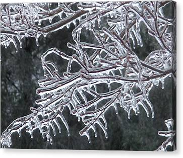 Icy Branch Canvas Print by Jeanette Oberholtzer
