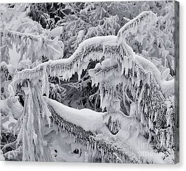Icy Breath Of The Frost Dragon Canvas Print by Royce Howland