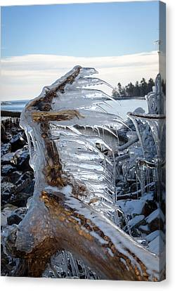 Icy Claw Canvas Print