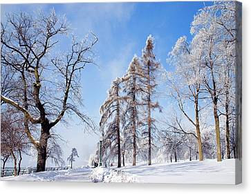 Icy Frosting Canvas Print by Timothy McIntyre