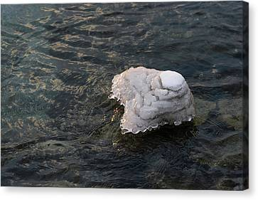 Icy Island - Drifting Solo On Silky Grays Canvas Print