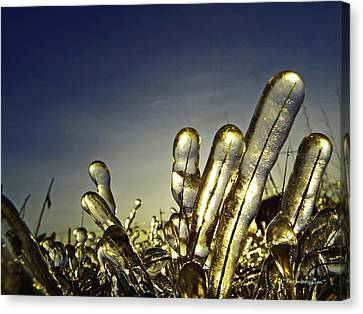 Icy Lawn Canvas Print
