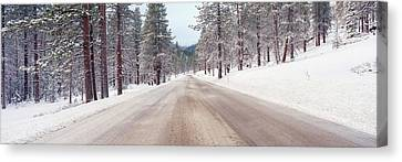 Icy Road And Snowy Forest, California Canvas Print by Panoramic Images