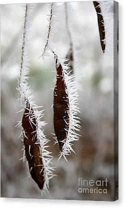 Icy Seed Pods Canvas Print