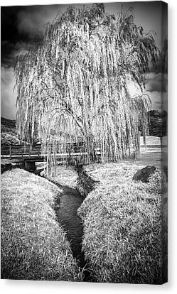 Icy Tree In The Meadow Black And White Canvas Print by Debra and Dave Vanderlaan