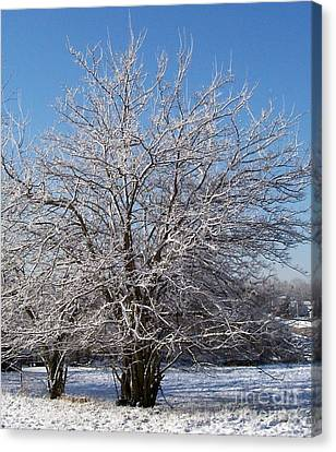 Icy Tree In The Sun Canvas Print by Marsha Heiken