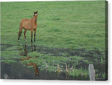 Idaho Farm Horse1 Canvas Print by Cynthia Powell