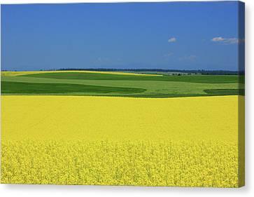 Idaho Field Canvas Print