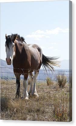 Idaho Work Horse 2 Canvas Print by Cynthia Powell