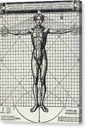 Ideal Proportions Based On The Human Body Canvas Print