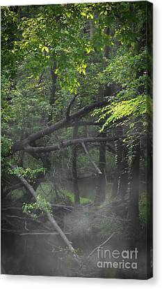 Canvas Print featuring the photograph If A Tree Falls In The Woods by Skip Willits