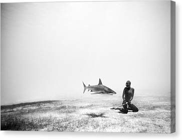 Levitation Canvas Print - If Sharks Could Fly by One ocean One breath