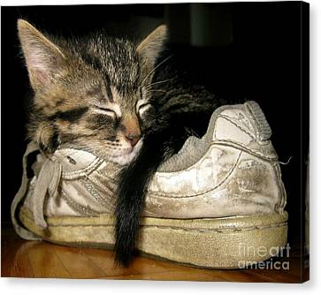 If The Shoe Fits Canvas Print by Heather King