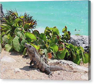 Canvas Print featuring the photograph Iguana At Tulum by Roupen  Baker