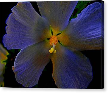 Illuminated Flower Canvas Print by Martin Morehead