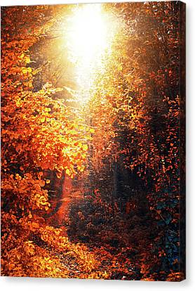 Illuminated Forest Canvas Print by Wim Lanclus