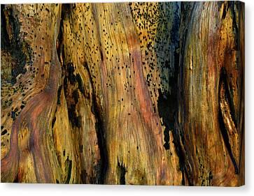 Illuminated Stump Canvas Print by Bruce Gourley