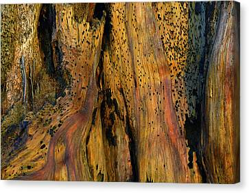 Illuminated Stump With Peeking Crab Canvas Print by Bruce Gourley