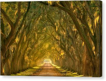Illumination Alley Canvas Print by Chris Moore