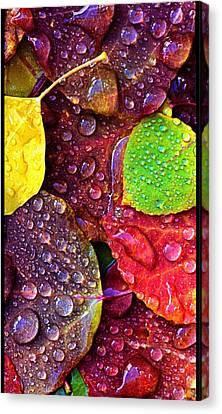 Illuminous Colour Canvas Print by Sheila Mcdonald
