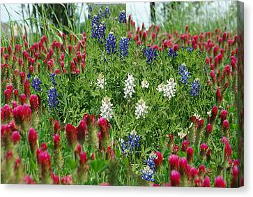 Illusions Of Texas In Red White Blue Canvas Print by Robyn Stacey