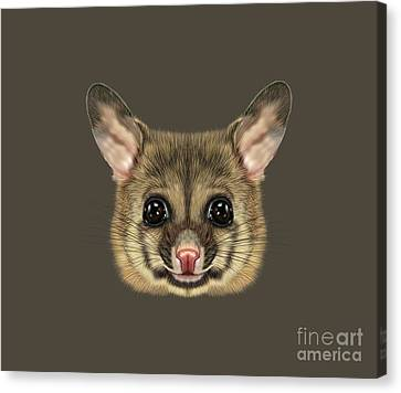 Brushtail Canvas Print - Illustrated Portrait Of Common Brushtail Possum.  by Altay Savrukov