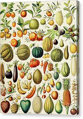 Illustration Of Fruit Canvas Print by Adolphe Philippe Millot