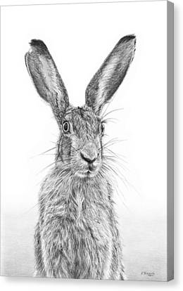 I'm Over Hare Canvas Print by Frances Vincent