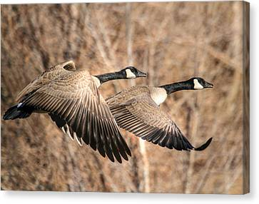 I'm Right Behind Ya Canvas Print by Donna Kennedy
