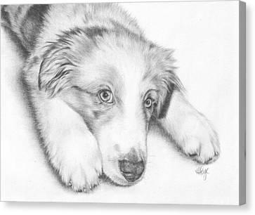 I'm Sorry - Australian Shepherd Puppy Canvas Print by Heather Page