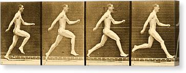 Image Sequence From Animal Locomotion Series Canvas Print by Eadweard Muybridge