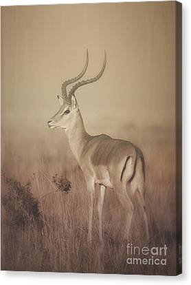Canvas Print featuring the photograph Impala At Dawn by Chris Scroggins