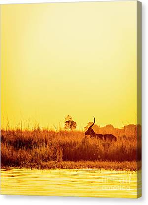 Impala Vintage Sunset Silhouette Canvas Print by Tim Hester