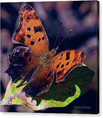 Imperfect Satyr Comma Canvas Print by DigiArt Diaries by Vicky B Fuller